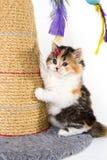 Котенок играя на шабере стоковое изображение