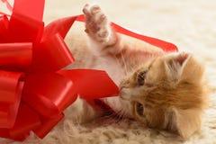 Котенок играя с подарочной коробкой Стоковое Фото