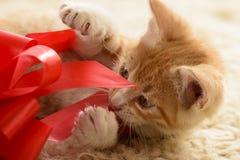 Котенок играя с подарочной коробкой Стоковая Фотография RF