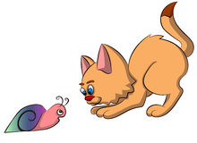 Котенок играя с улиткой Стоковое Фото