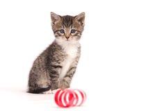 котенок играя тесемки Стоковая Фотография RF