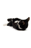котенок играя детенышей Стоковые Изображения
