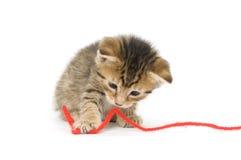 котенок играя tabby Стоковые Изображения