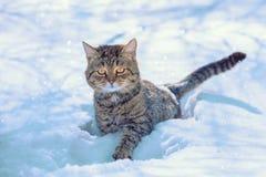 Котенок идет в глубокий снег стоковое фото