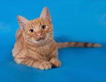 Котенок имбиря лежа на сини стоковые фотографии rf