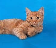 Котенок имбиря лежит на сини стоковая фотография