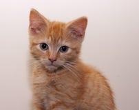 Котенок имбиря, конец-вверх Стоковые Изображения
