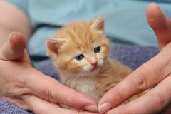 котенок имбиря малюсенький Стоковые Изображения
