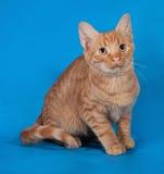 Котенок имбиря сидя на сини стоковая фотография rf