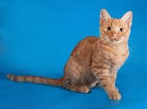 Котенок имбиря сидя на сини стоковая фотография