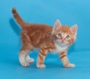 Котенок имбиря смотря вверх на сини Стоковые Изображения
