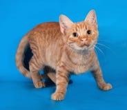 Котенок имбиря стоя на сини стоковая фотография rf