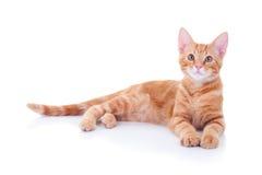 Котенок имбиря Стоковые Фото