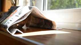 Котенок имбиря акции видеоматериалы