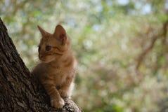 Котенок исследуя в дереве Стоковое Изображение RF