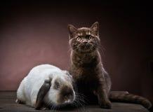 Котенок и кролик Стоковая Фотография RF