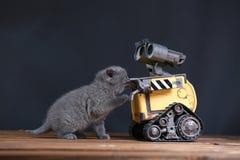 Котенок и робот Стоковые Фото