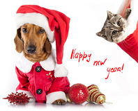 Котенок и собака стоковые изображения