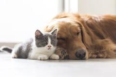 Котенок и собака snuggle совместно стоковая фотография rf