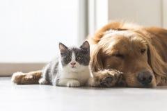 Котенок и собака snuggle совместно стоковая фотография