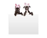Котенок и щенок пасхи держа знак Стоковая Фотография