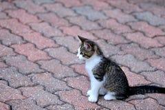 Котенок кирпича Стоковая Фотография RF