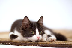 котенок ковра Стоковое фото RF