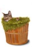 котенок корзины немногая Стоковая Фотография RF