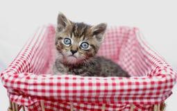 котенок корзины Стоковые Фотографии RF