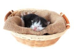 котенок корзины Стоковые Изображения