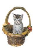 котенок корзины Стоковые Фото
