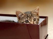 котенок коробки Стоковое Изображение