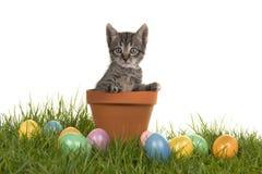 Котенок кота младенца Tabby в цветочном горшке на зеленой траве и покрашенных пасхальных яйцах Стоковая Фотография