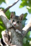 Котенок кота на дереве Стоковые Изображения