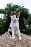 Котенок кота Стоковые Изображения