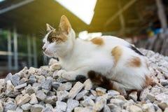 Котенок кота Стоковое Изображение RF