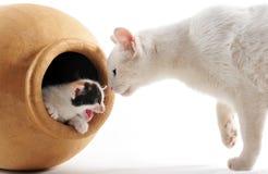 котенок кота Стоковые Фото