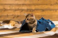 Котенок крадется совершенно неожиданно брюки джинсов стоковые фото