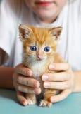 Котенок красных волос маленький в руках детей стоковые изображения rf