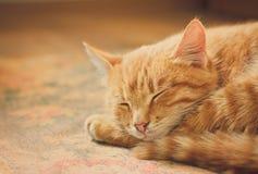 котенок кровати немногая красный спать Стоковое Изображение