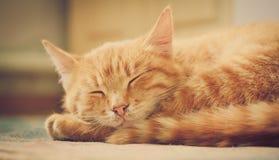 котенок кровати немногая красный спать Стоковая Фотография RF