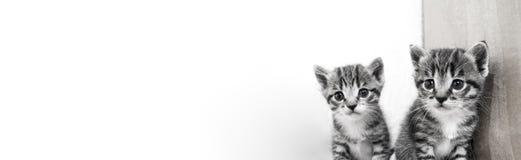 котенок малый Товары магазина для котов Укрытие для любимчиков Защита Стоковые Изображения RF