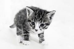 котенок малый Товары магазина для котов Укрытие для любимчиков Защита Стоковое Изображение RF