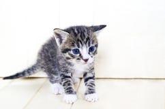котенок малый Товары магазина для котов Укрытие для любимчиков Защита Стоковое фото RF
