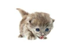 котенок малый стоковая фотография