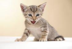 котенок малый Стоковая Фотография RF