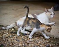 Котенок милый и играть кота матери Стоковое фото RF
