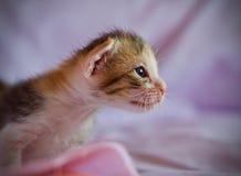 Котенок милый Стоковое Изображение