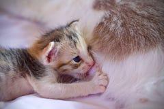 Котенок милый Стоковое Изображение RF