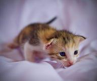 Котенок милый Стоковые Фотографии RF